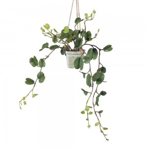 Hoya Hanging Pot