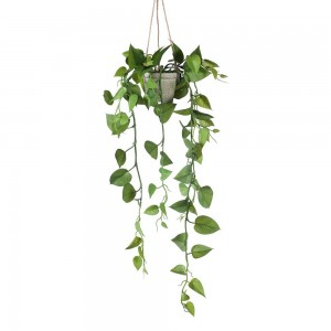 Philodendron Hanging Pot