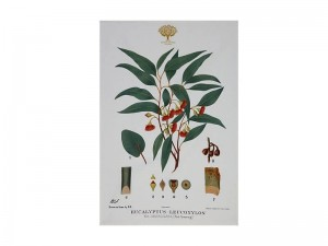 Flowering Gum - Tea Towel