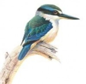 Coaster Sacred Kingfisher