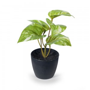 Pothos Marble In Pot